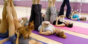 blog-dog-yoga